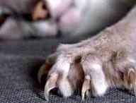 Что мы знаем о кошачьих царапинах? Симптомы и исцеление
